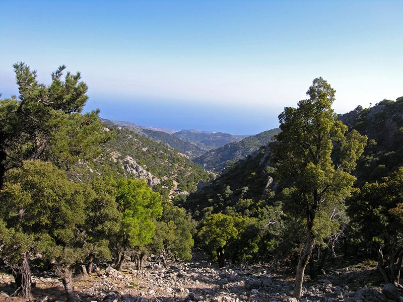 Forests of Crete