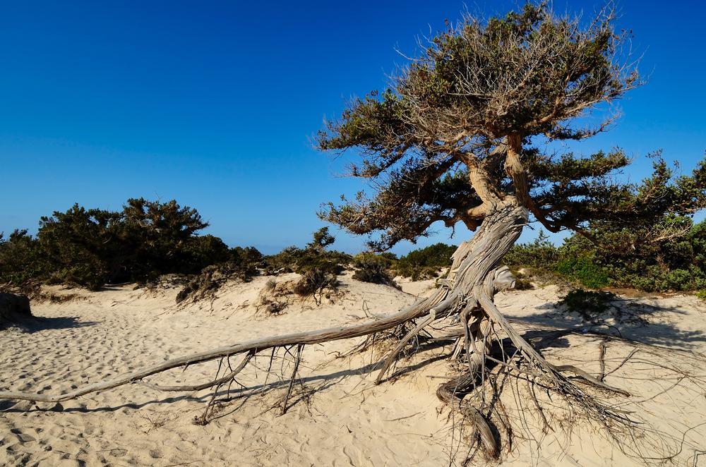Chrissi Beach (Gaidouronisi)