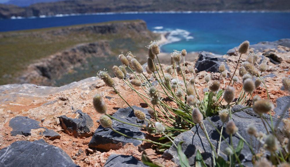 Flora & Fauna of Crete