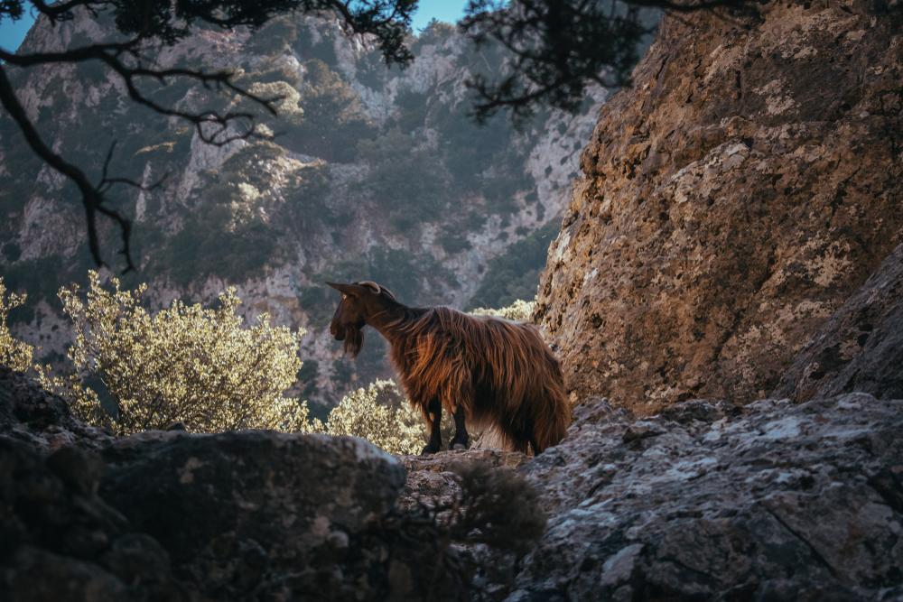 Imbros Gorge – Sfakia – Chania